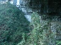 Pusadong